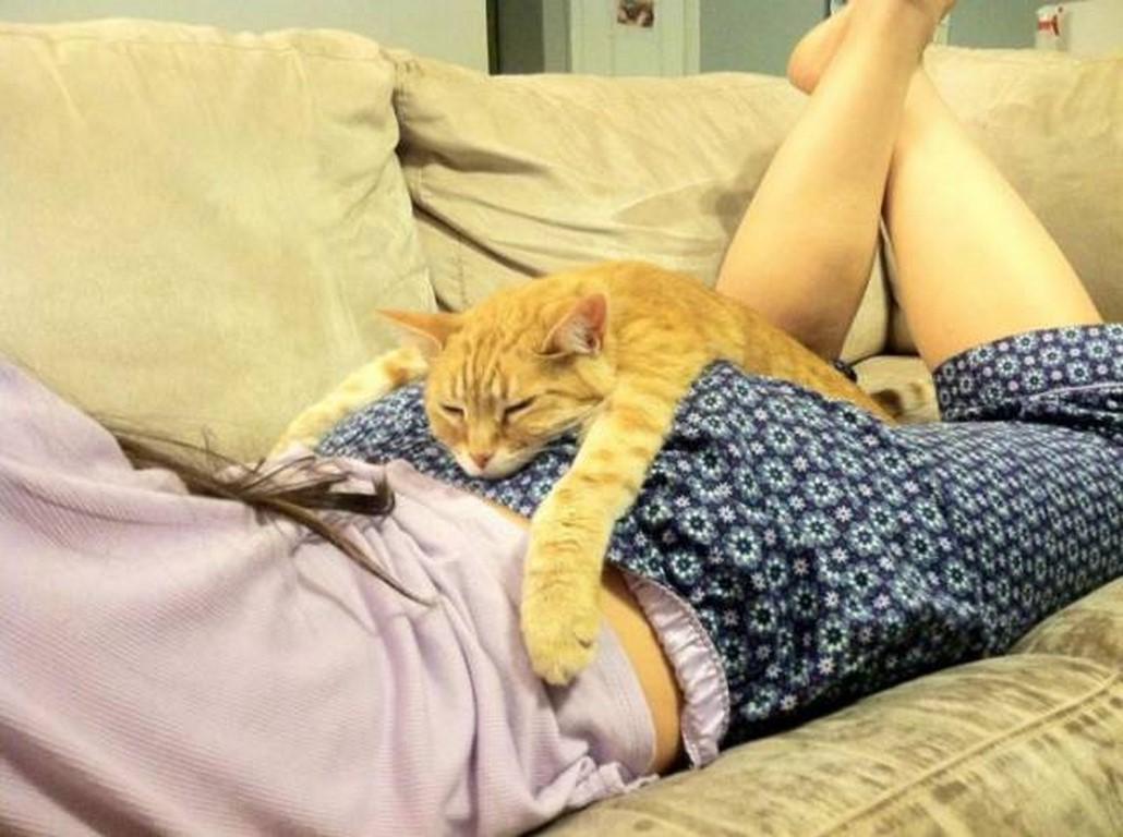 """Résultat de recherche d'images pour """"chat vendredi"""""""