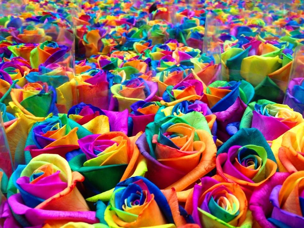 La Signification Des Couleurs Des Roses Fenoweb