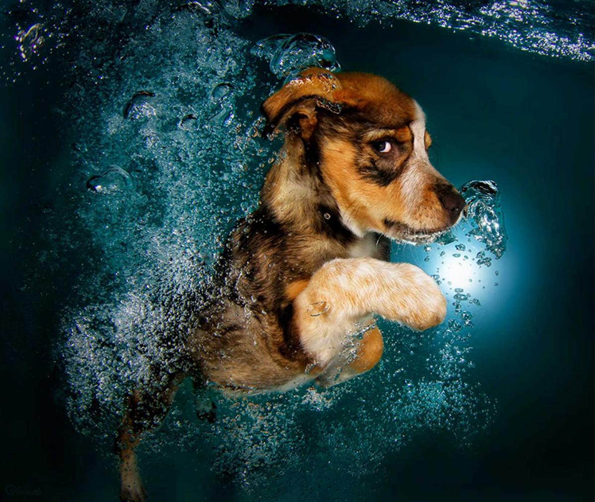 20 photos de chiens en action sous l 39 eau f noweb. Black Bedroom Furniture Sets. Home Design Ideas