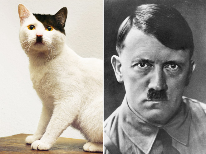 Adolf Hitler et un chat