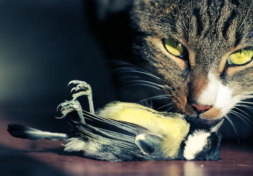 votre-chat-veut-vous-tuer-11