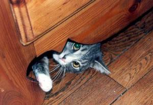 votre-chat-veut-vous-tuer-16