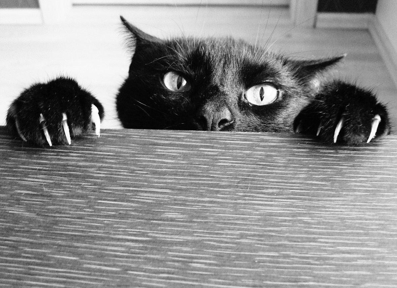 votre-chat-veut-vous-tuer-17