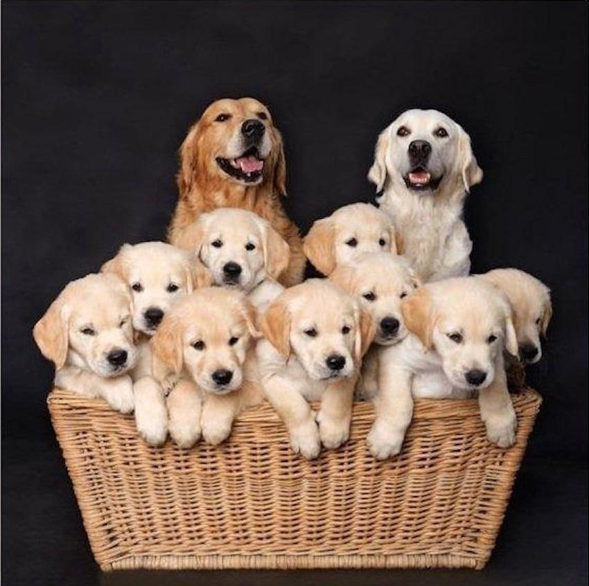 20 photos de chiens qui posent fi rement en famille f noweb. Black Bedroom Furniture Sets. Home Design Ideas