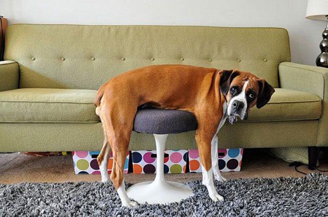 """Résultat de recherche d'images pour """"chien humour"""""""
