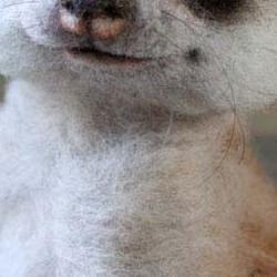 Un artiste russe crée de parfaits animaux en peluche