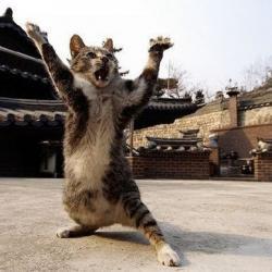 Quand les chats maîtrisent les arts martiaux