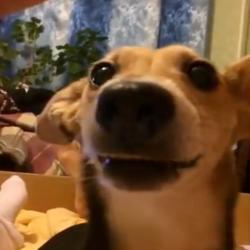 Un chien qui va vous faire mourrir de rire