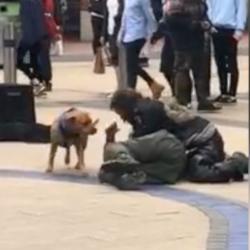 La technique particulière d'un chien pour stopper une bagarre