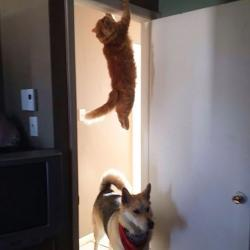 Quand les chats se prennent pour des ninjas