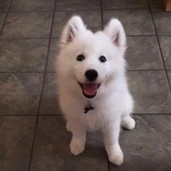 Féliciter son chien : les photos avant et après
