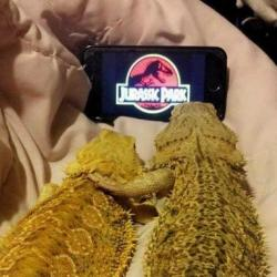 Le vendredi, on se détend en images #022