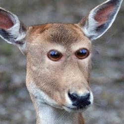 Si les animaux avaient les yeux en face des trous