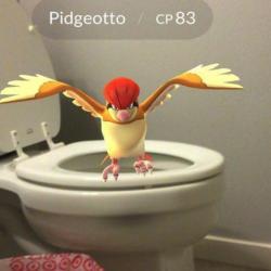 Quand les Pokémon apparaissent dans des endroits insolites