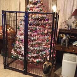 Protéger son sapin de Noël des animaux de compagnie