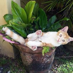 Quand les chats se prennent pour des plantes