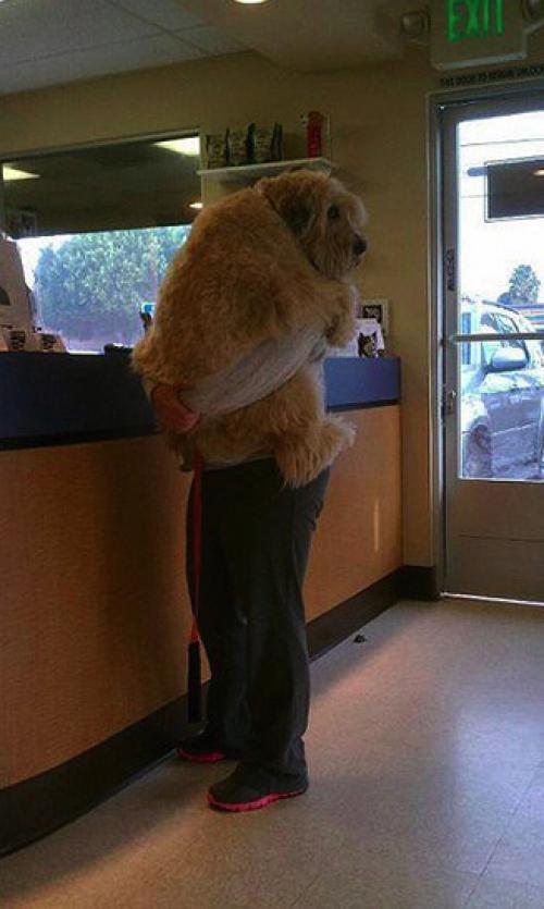 Quand les animaux découvrent qu'ils sont chez le vétérinaire