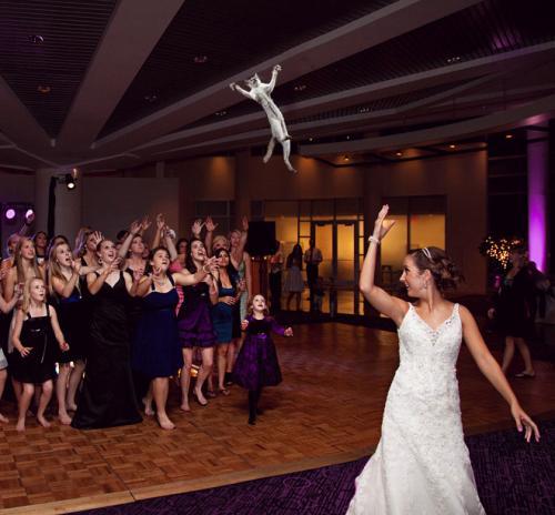 Et si on remplaçait le bouquet de la mariée par des chats