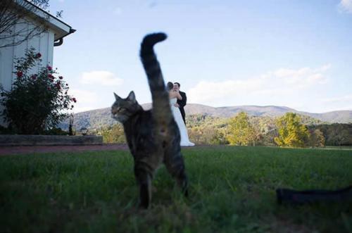 Les chats sont les rois des Photobomb