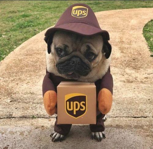 20 déguisements pour chiens qui vont vous faire délirer