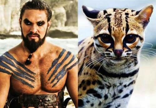 Quand les chats se prennent pour des acteurs de Game of Thrones