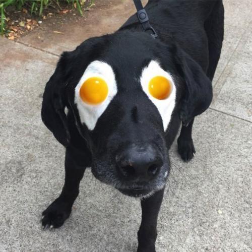 Quand internet détourne la photo d'un chien
