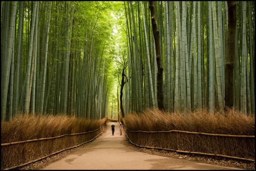 Découvrez le Japon au travers ces fabuleux clichés