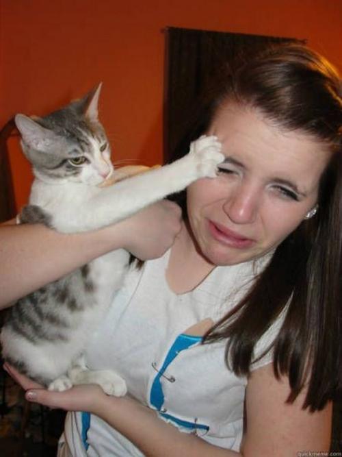 Le chat n'est clairement pas le meilleur ami de l'homme