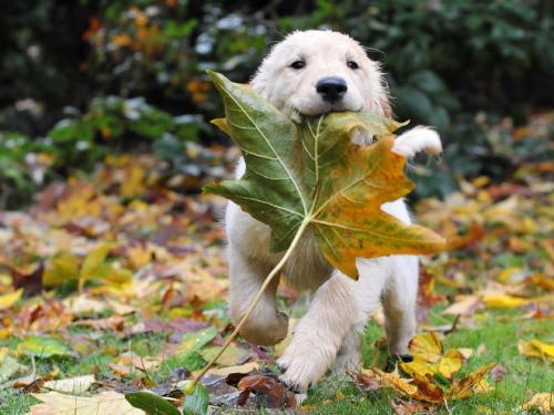 Les chiens et l'automne, une grande histoire d'amour