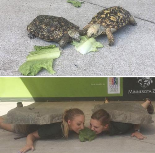 Quand des gardiens de Zoo recréent les photos des animaux