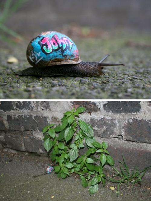 Slinkatchu fait du street art sur des escargots