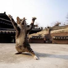 Les chats maîtres en arts martiaux