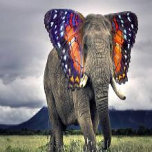 Des animaux hybrides que vous n'avez jamais vue