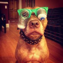 Voici le chien le plus sympa du monde
