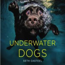 Photographier des chiens sous l'eau