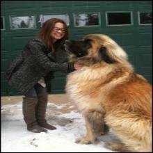 Les 20 plus grands chiens que le monde ai connu