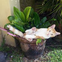 Des chats qui pensent être des fleurs